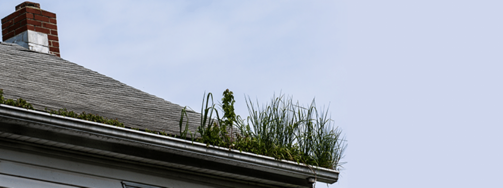 Spring Cleaning Tip Gutters